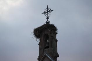 Eguisheim, Alsace - Nid de cigognes