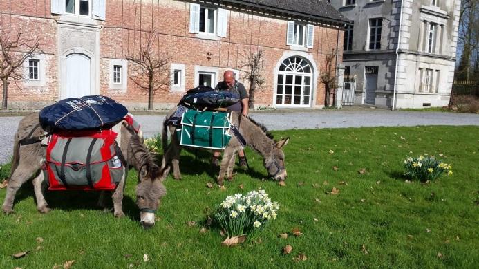 Ânes en pèlerinage vers Saint-Jacques de Compostelle...