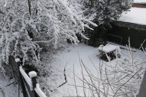 2021-01-24 - La Marguerite sous la neige